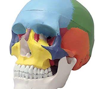 リフトアップ効果倍増【1番人気オプション】頭蓋骨調整ヘッドスパ  | 小倉 小顔矯正
